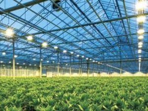Sviluppo di pianta della lampada Son-Td1000W Argo 400V di HPS