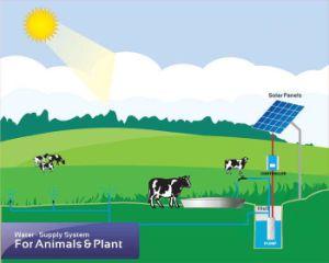 10kw pompa ad acqua senza spazzola di energia solare del motore di CA della pompa sommergibile solare 380V per irrigazione, prezzo della benzina solare dell'acqua