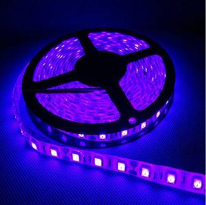 Luz de tira flexível nova 96LEDs/M do diodo emissor de luz do projeto SMD5054