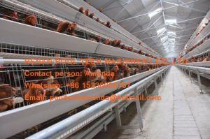 Het Landbouwbedrijf van het Gevogelte van Kameroen - de Kooi van de Kooi & van het Gevogelte van de Kip van de Batterij & de Kooi van de Laag voor de Productie van het Ei met de Automatische Machine van de Inzameling van het Ei