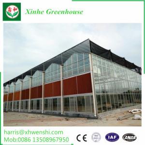 Casa Verde Jardim