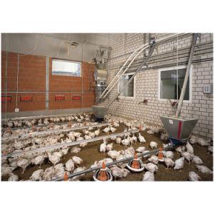 Хорошее качество низкая цена бройлерных куриное мясо птицы оборудования