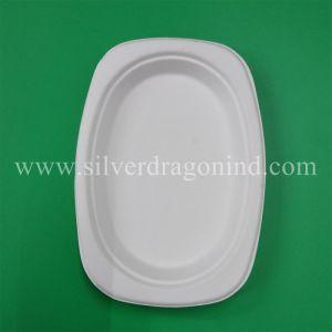 Plaque de pâte à papier de canne à sucre biodégradables, plaque jetables