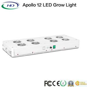 La pianta dell'Apollo 12 LED si sviluppa chiara per la serra commerciale