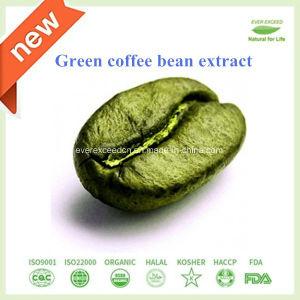 Natürlicher grüner Kaffeebohne-Auszug 10% - 50% Chlorogensäure