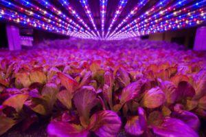 99,6% алюминия Lumileds 100W/150 Вт/200W/240 Вт/300Вт Светодиодные лампы отсека для драйвера Meanwll высокого