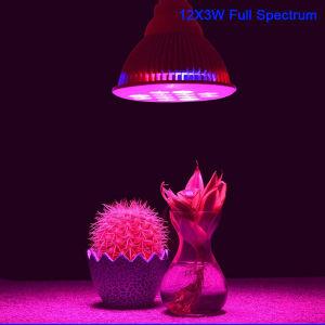 Lâmpada de crescimento interior onde comprar luzes crescer PAR38 cresça a Lâmpada LED