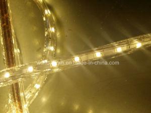 Alto indicatore luminoso della corda di Istruzione Autodidattica LED per la decorazione del centro commerciale