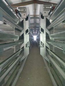 Xinguang konzipiert Huhn-Gerät