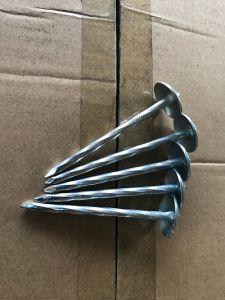 Parapluie Tête/Queue lisse ou torsion clou