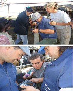 Tierarzt-Ultraschall-Maschine/Handultraschall für Cattle&Horse Handscanv8