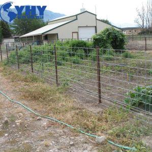 Het gegalvaniseerde Vee verhindert Omheining van het Gebied van het Landbouwbedrijf van de Draad van de Pagina van de Scharnier de Gezamenlijke