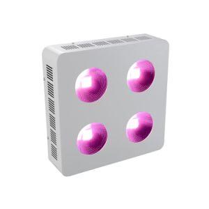 卸し売り800W穂軸LEDはVeg&Fruitのプラントのために軽く育つ