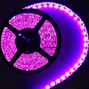 Populares 5050 60LED LED Strip 12V/24V tira de LED RGB flexibles