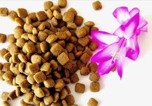 De natuurlijke Natuurlijke voeding voor Grote Honden droogt Voedsel