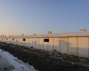 강철 구조물 섬유유리 샌드위치 위원회 가금 닭 농장 집