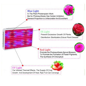 Venta de Hot Chip de doble LED de 60 PC crecer la planta de espectro completo de 300W de iluminación LED Luz crecer