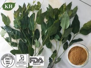 preço de fábrica do extrato de folhas de eucalipto