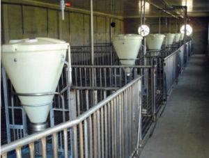 Campione libero del maiale dell'alimentatore asciutto e bagnato della strumentazione di azienda agricola del maiale