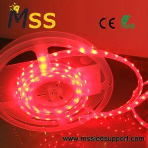 5050 30 LED/m faixa de leds flexíveis com homologação CE