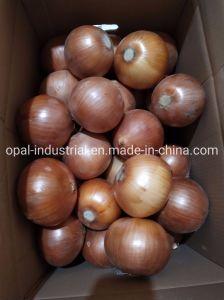 Haute qualité chinois Un-Peeled Carton d'oignons jaunes fraîches
