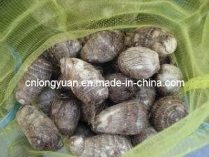 La nouvelle récolte Fresh Taro
