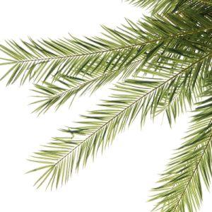 preço de fábrica Coqueiros artificial de fibra de vidro exterior Palm personalizada
