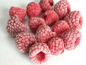 IQF 나무 딸기 또는 동결된 나무 딸기