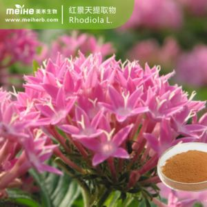 100% натуральные Rhodiola rosea Extract Rosavin1-5% Rhodioloside1-5 %
