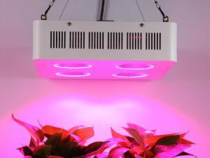 穂軸LEDはセリウムRoHSとの軽い800Wを育てる