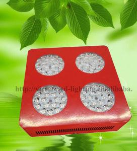 Planta de luz LED de alta potencia 200W 300W 400W 800W