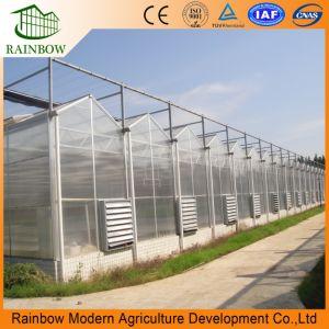 PC policarbonato tipo Venlo Hoja de efecto invernadero de hortalizas y flores / Venlo de efecto invernadero de tomate