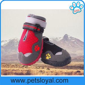 Amazon de suministro de productos estándar de Pet mascota perro fabricante de zapatos botas