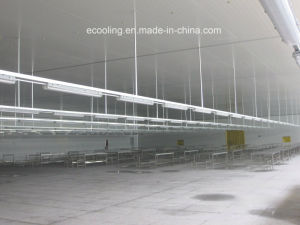 Kaltlagerung für Gemüse-Frucht-Abkühlung-aufbereitende Fabrik