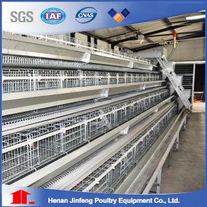 Equipamento de Avicultura de bateria automático para as aves de gaiola de frango House