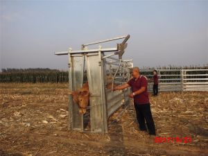 Schiacciamento galvanizzato resistente di compressione del bestiame della Cina