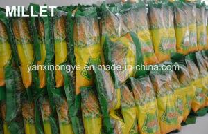 Hoogst Voeding die de Gele Geschilde Gierst van het Selenium van de Gierst Groene en Organische voeden