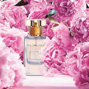 Óleo de suavização de fragrância grossista com Fragrância encantadora