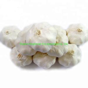 Оптовая торговля китайский свежий обычный белый чеснок