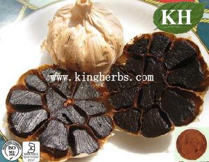 Schwarzer Knoblauch/Antioxidans-/, Immunitäts-Puder erhöhend