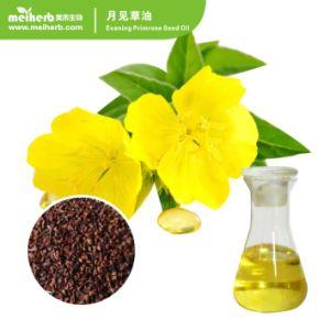 Olie van de Teunisbloem van de Olie van het Zaad van de Teunisbloem van de essentiële Olie de Hete Verkopende Koud geperste