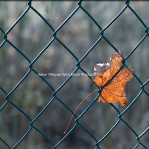 Rete fissa rivestita della maglia del metallo di obbligazione di collegamento Chain del PVC dell'acciaio inossidabile per il giardino