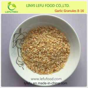新しい穀物の広告によって水分を取り除かれるニンニクの微粒ルートとの8-16