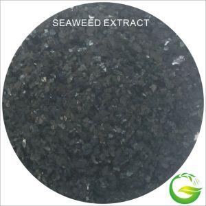 De Organische Meststof van het Uittreksel van het zeewier in Landbouw
