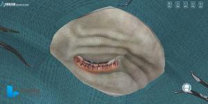 Correção de Entropion Cirurgia Animal palpebral de Software de Sistema de treino de simulação virtual