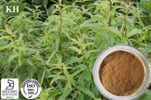 100 % de la verveine extrait naturel de citron : 12 : 1; 20 : 1 ;