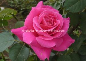Natural Puro Aceite de Rosa, Rosa aceite refinado, Aceite Esencial de Rosa