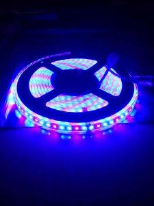 2835 120LED/M 12V R: B=1: Una striscia dei 2 LED