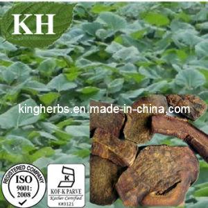 Extrato de ruibarbo Chrysophanol 98% por HPLC