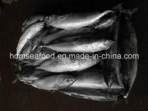 Всего за круглым столом Замороженные рыбные Bonito (Euthynnus affinis)